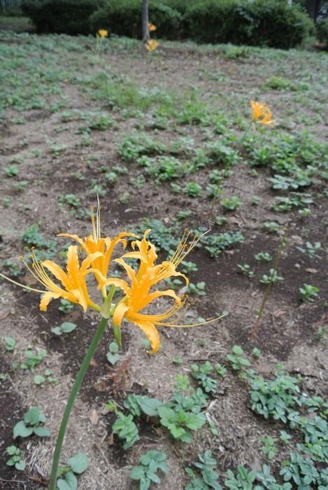 秋の公園で草花&虫たち_e0089232_1303131.jpg