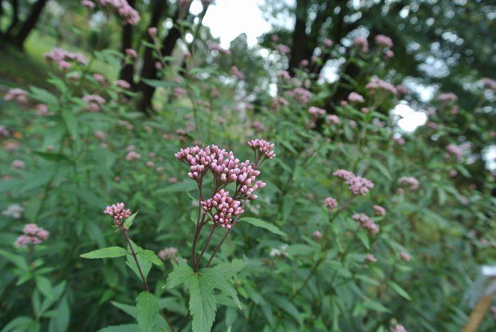 秋の公園で草花&虫たち_e0089232_13132345.jpg