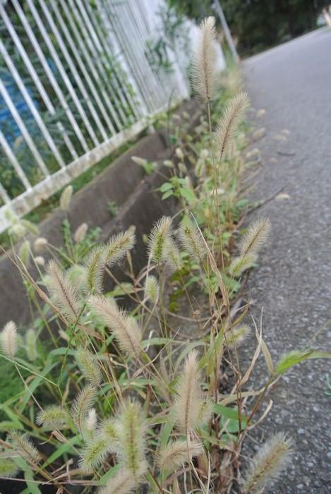 秋の公園で草花&虫たち_e0089232_13181036.jpg