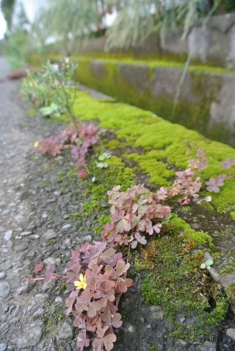 秋の公園で草花&虫たち_e0089232_13185668.jpg