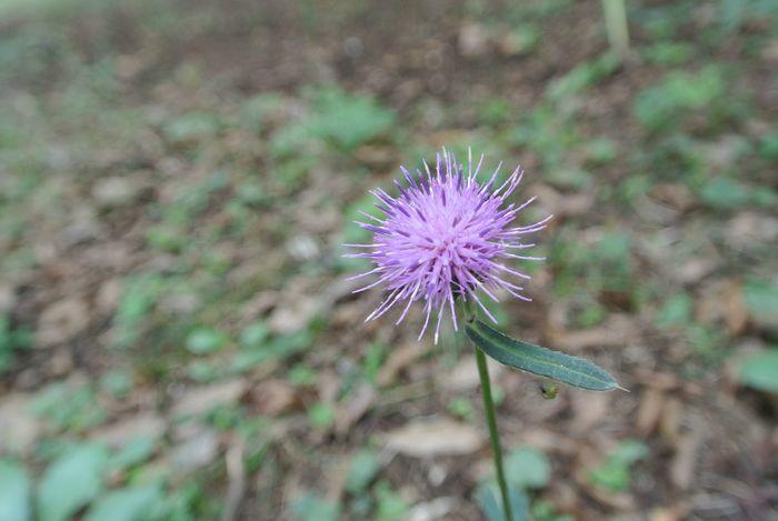 秋の公園で草花&虫たち_e0089232_1323472.jpg
