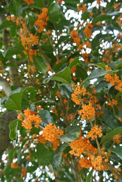 秋の公園で草花&虫たち_e0089232_1391664.jpg