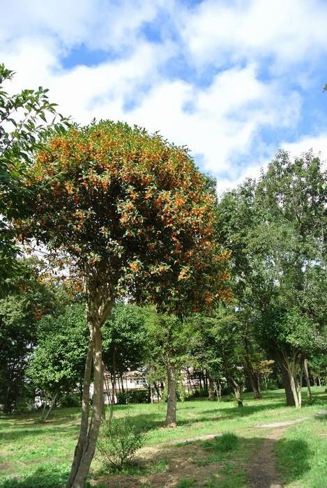 秋の公園で草花&虫たち_e0089232_1393097.jpg