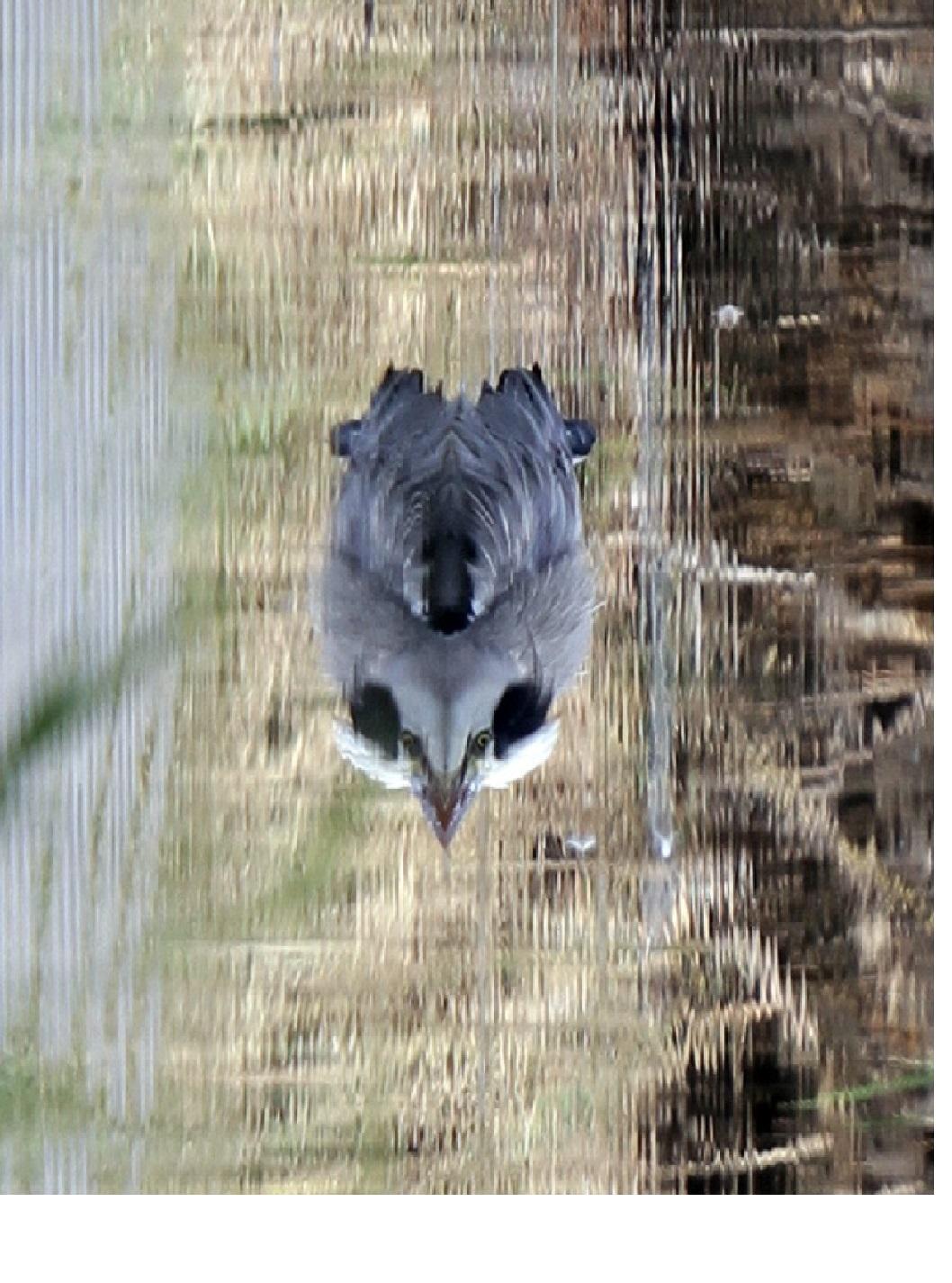 遊びです‼MFの沼で謎の物体を、実は----。_f0239515_2112566.jpg