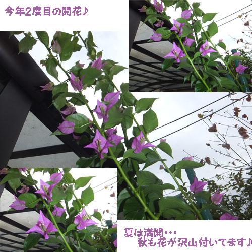 f0032418_15542053.jpg