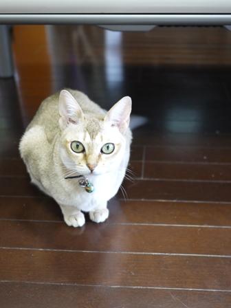 猫のお友だち プーちゃんとのくん編。_a0143140_20101557.jpg