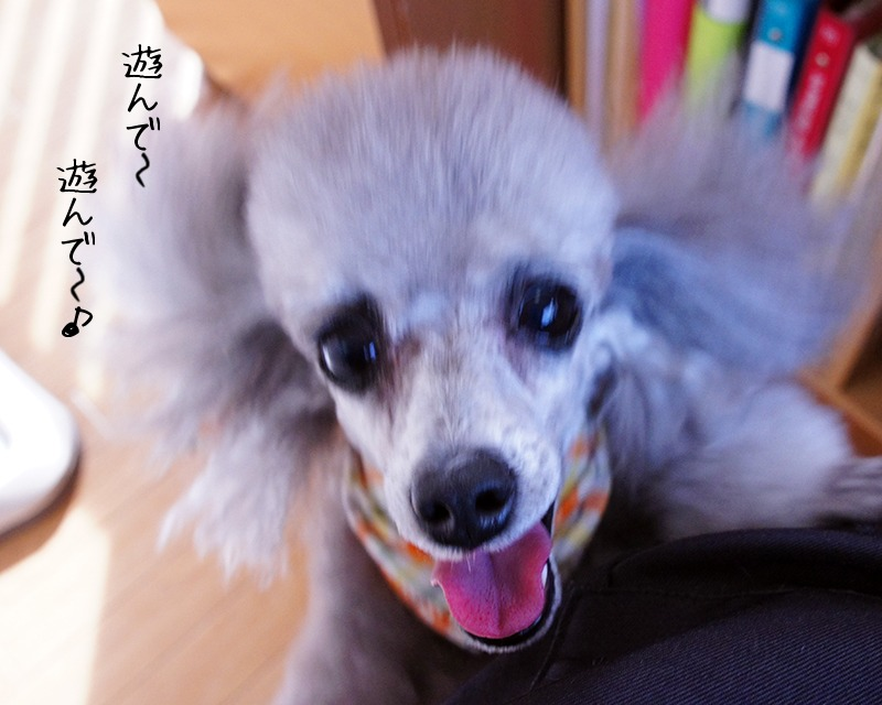 ちっち君★サニーちゃん_d0265342_15183165.jpg