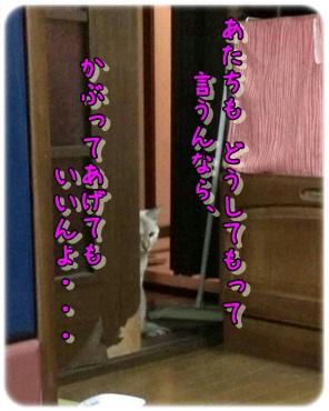 b0151748_1230026.jpg