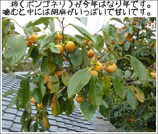 f0204248_1654732.jpg