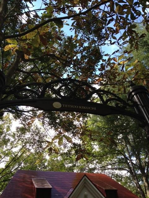 朴木の葉がヒラリ~_b0147051_12501094.jpg