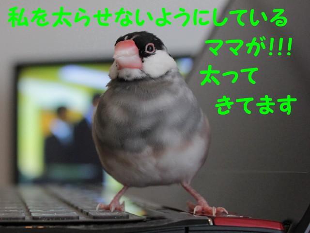 b0158061_2120484.jpg