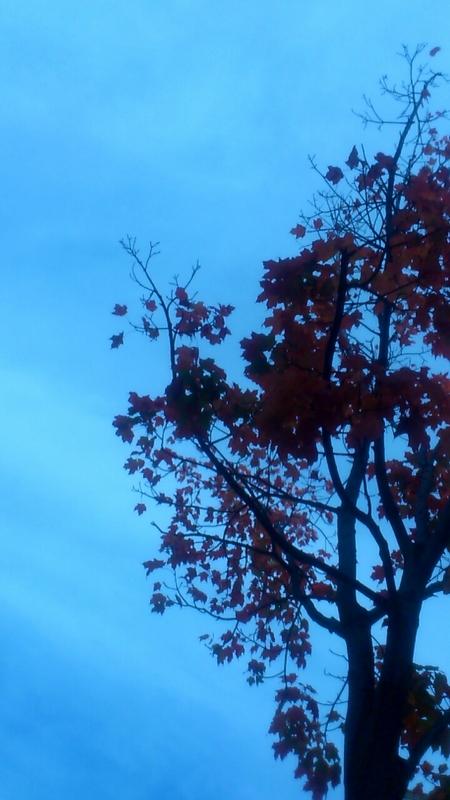 大通公園で秋みつけた_b0106766_23215126.jpg