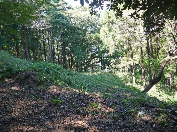 山桜、紅葉の植樹の準備整う:10・8六国見山臨時手入れ_c0014967_21541024.jpg