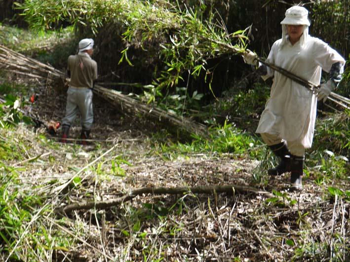 山桜、紅葉の植樹の準備整う:10・8六国見山臨時手入れ_c0014967_21552870.jpg