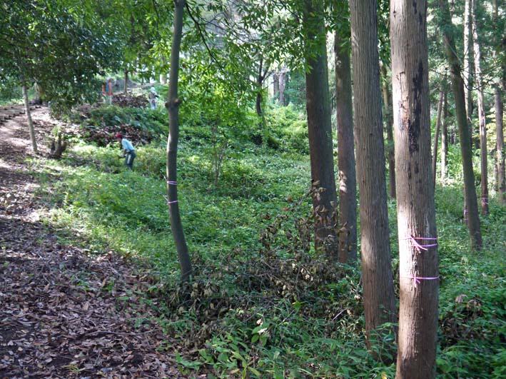 山桜、紅葉の植樹の準備整う:10・8六国見山臨時手入れ_c0014967_21592529.jpg