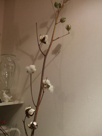 オークリーフ(咲いています)_f0049672_17264142.jpg