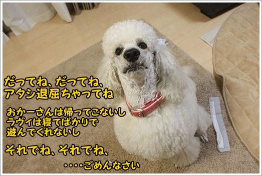 b0111376_13574471.jpg