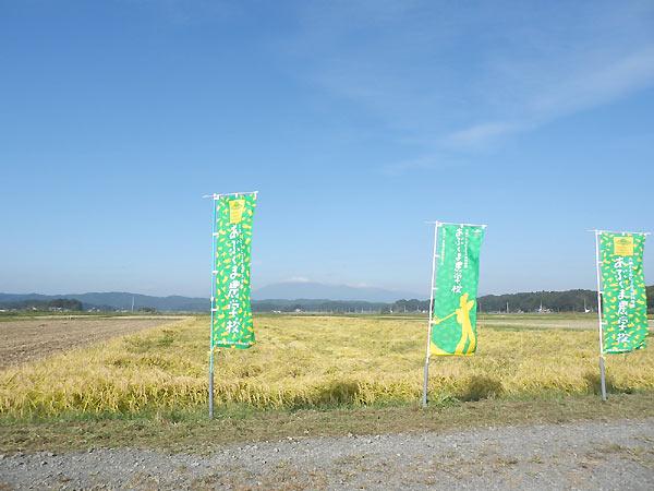 稲刈り体験(緑ヶ丘小・北郷小)_d0247484_200153.jpg