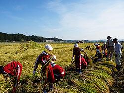 稲刈り体験(緑ヶ丘小・北郷小)_d0247484_2052980.jpg