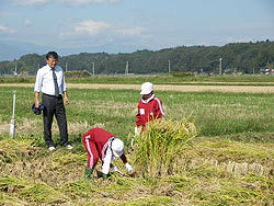 稲刈り体験(緑ヶ丘小・北郷小)_d0247484_207132.jpg