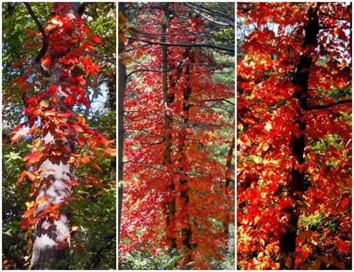 秋の小鳥たち(3)シジュウカラ/コガラ_a0204089_6385941.jpg