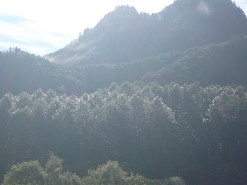 朝露に濡れる木_f0227395_11513319.jpg