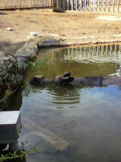 多摩動物公園へ行ってきた。_d0096499_1864146.jpg