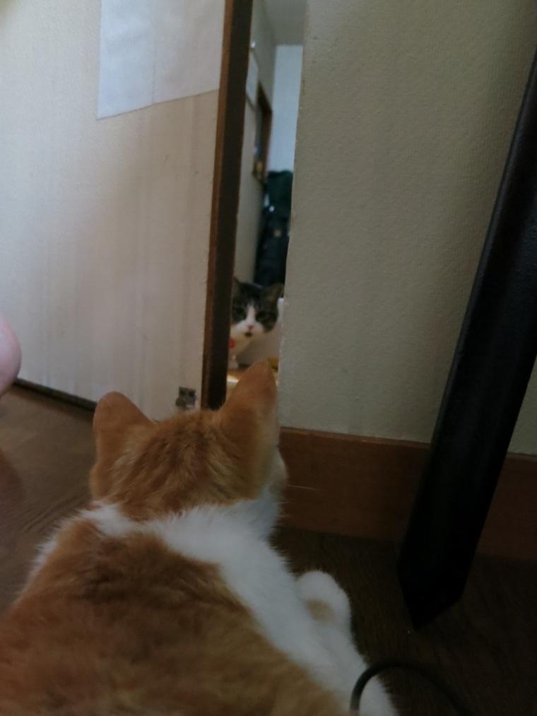 【猫】睨み合い?_f0141609_10473117.jpg