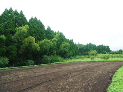 菊池水源里山ニンジン 完全無農薬のニンジン作り_a0254656_17482219.jpg