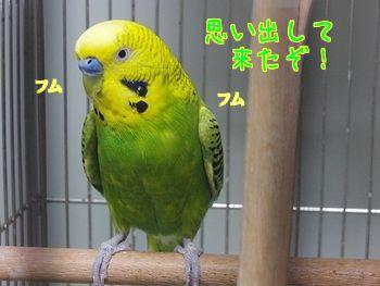 f0196665_2210432.jpg