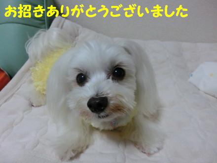 b0193480_10364555.jpg