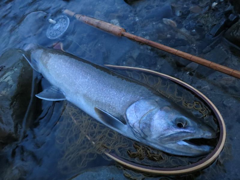 今年の思い出に残る魚達_f0166390_21172032.jpg