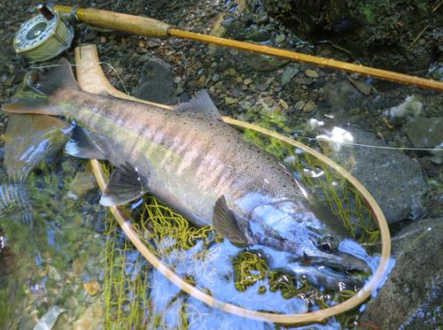 今年の思い出に残る魚達_f0166390_21175573.jpg