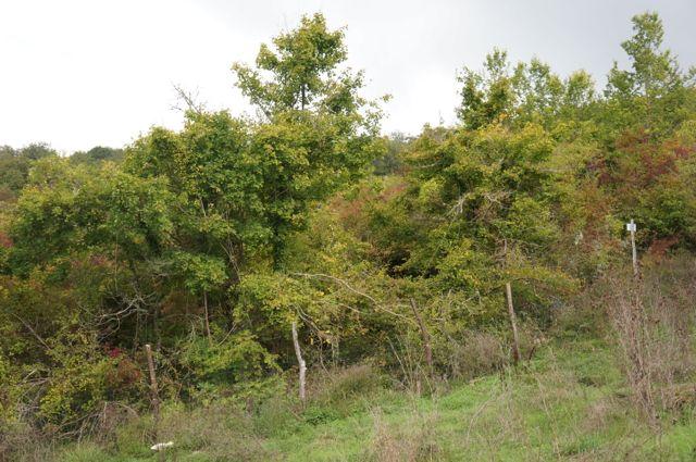 秋の色_f0106597_2282079.jpg
