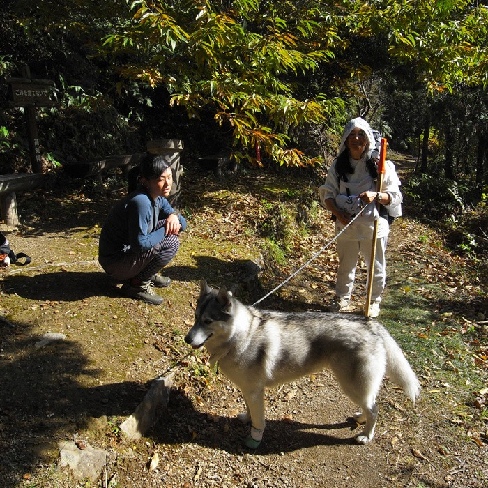 Memory of the second pilgrimage with husky HANA_c0049299_10385462.jpg