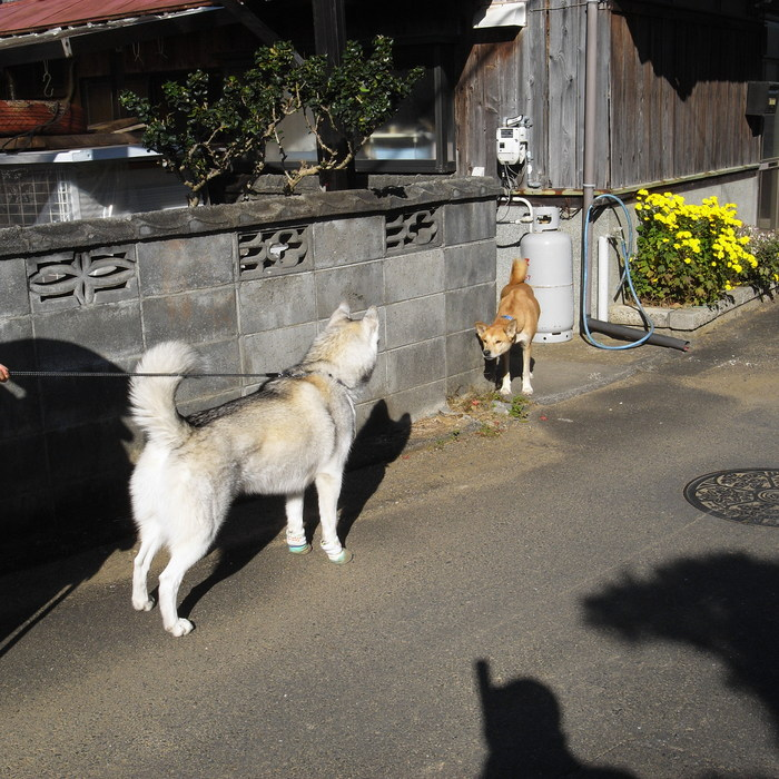 Memory of the second pilgrimage with husky HANA_c0049299_12144637.jpg