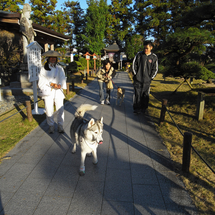 Memory of the second pilgrimage with husky HANA_c0049299_1226149.jpg
