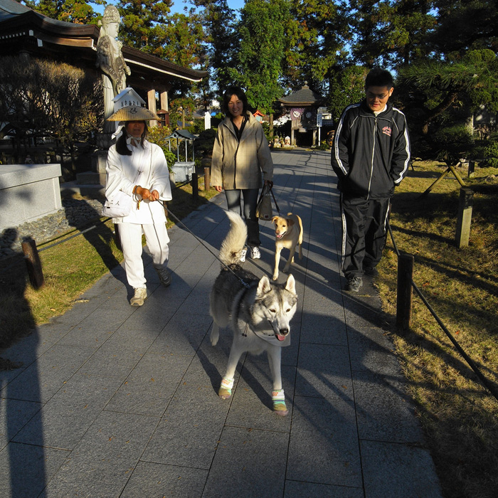 Memory of the second pilgrimage with husky HANA_c0049299_1226301.jpg