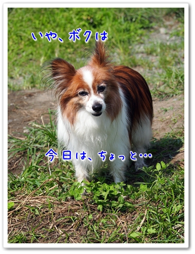 d0013149_2325995.jpg