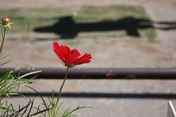 風街ろまん いい匂い 162 「ポーチュラカ、一日という旅」_c0121570_15305634.jpg