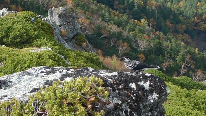 北岳登山〜下り〜_e0155231_1152642.jpg