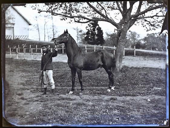 第2回アドベントカレンダー(17日目)「牛馬の写真-発見されたガラス原板-」_f0228071_11585468.jpg