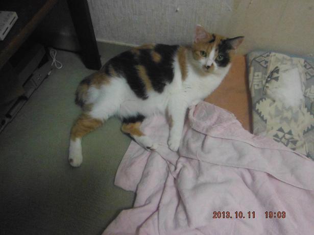 今日の猫達_b0112380_20242034.jpg
