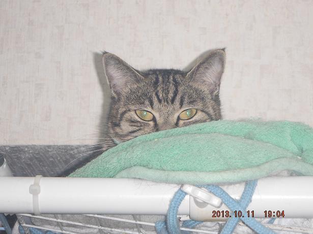 今日の猫達_b0112380_20253165.jpg