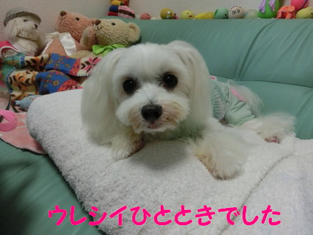 b0193480_1620133.jpg