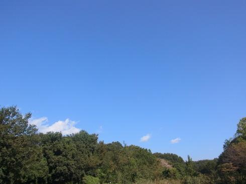 埼玉中部          クロコノマチョウ幼虫2013/10/12①_d0251807_17154426.jpg