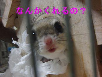 f0196665_926224.jpg