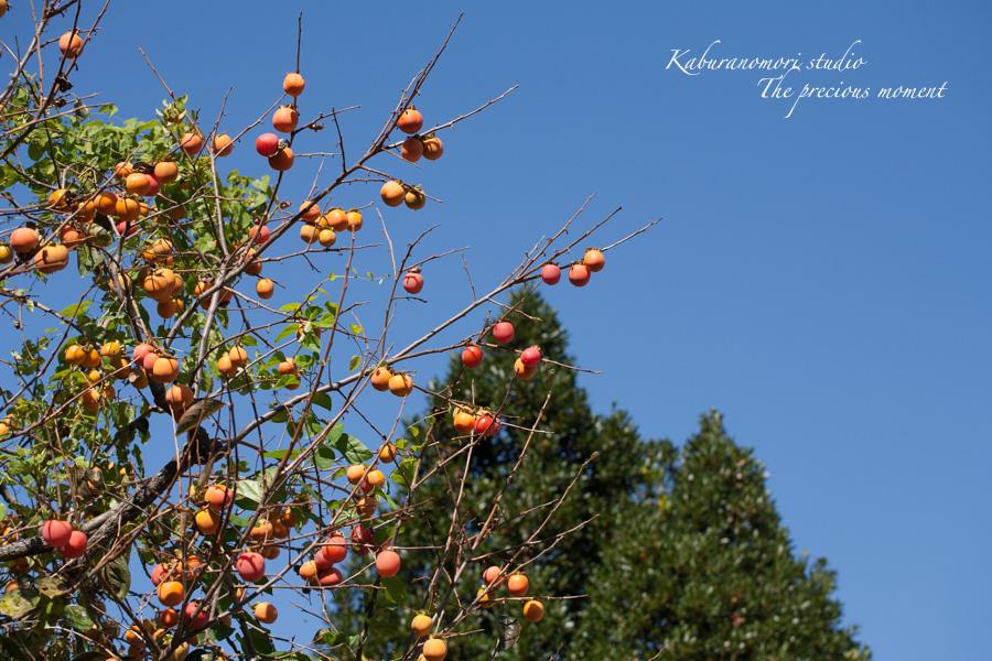 暖かな秋の初め_c0137403_18391162.jpg