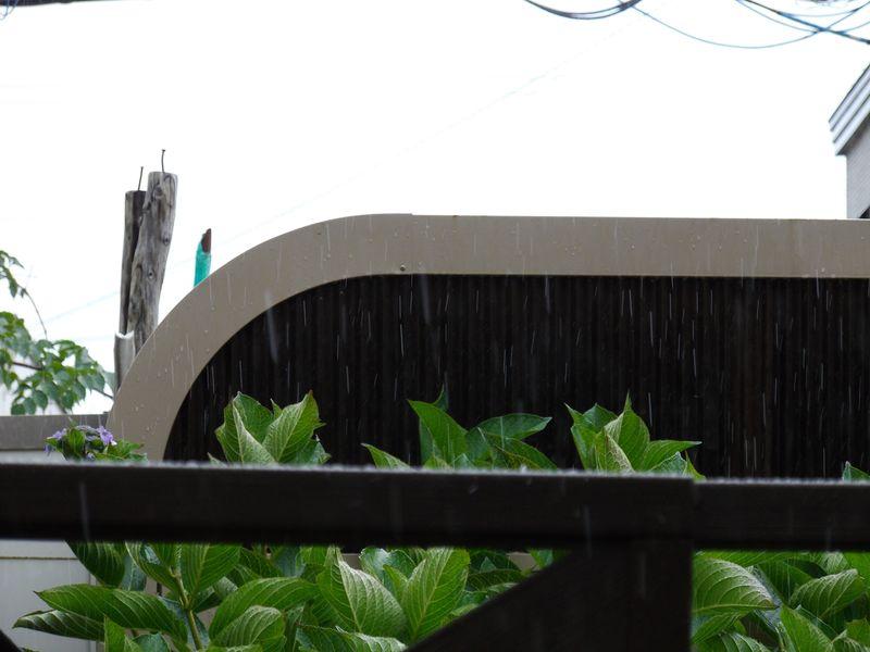 くもりのち晴れのち雨時々止む_c0025115_20573558.jpg