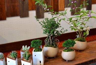 盆栽の新入荷のご案内_d0263815_17312667.jpg